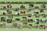 Building a Community Garden (semester?), IPRO 344: Community Gardening IPRO 344 Poster S06