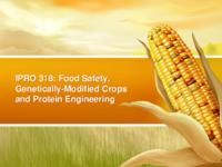 Design of a Genetically Modified Food Database (Semester Unknown) IPRO 318: Food Safety, Genetically-Modified Crops and Protein Engineering IPRO 318 Final Presentation Sp08